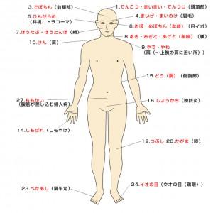 身体の部位・病名(身体前面)